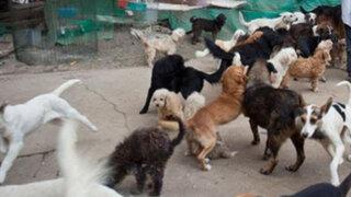 Áncash: más de veinte perros atacaron a un mendigo por no dejar comida