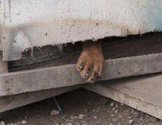 Denuncian que municipalidad de VMT encierra a sus perros en cajas