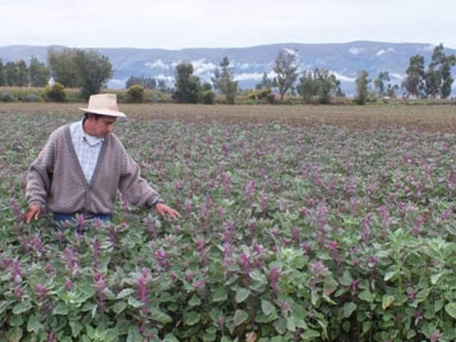 Día del campesino: Presidencia saluda labor agrícola