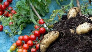 TomTato: una planta que produce papas y tomates sale al mercado