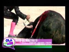 'Alto al Maltrato': campaña nacional busca frenar violencia contra los animales
