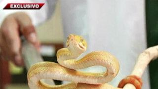 Bellas y peligrosas: el fascinante y misterioso mundo de las serpientes