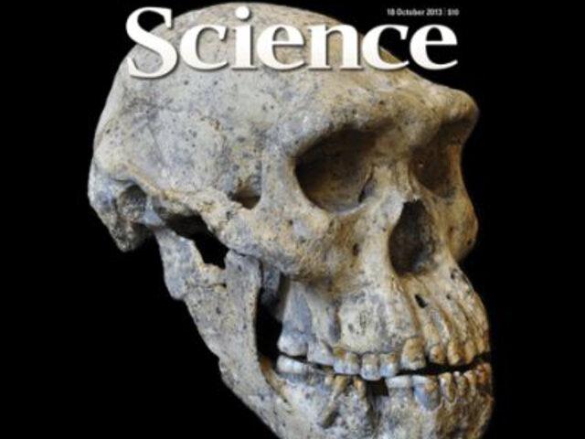 Fósil de 1,8 millones de años reescribiría la historia de la evolución humana