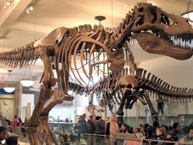 Estados Unidos Descubren Porque Los Dinosaurios Eran Tan Gigantes Panamericana Tv Todas las noticias sobre dinosaurios publicadas en el país. descubren porque los dinosaurios eran