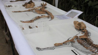 Grupo de arqueólogos halla fósiles de perros en el Parque de las Leyendas