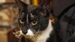Once gatos resultan con graves quemaduras tras incendio en Jesús María