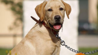 Argentina: perro evitó que dos hermanas sean ultrajadas sexualmente