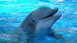VIDEO: Delfín masturbándose con un pez muerto causa polémica en Internet