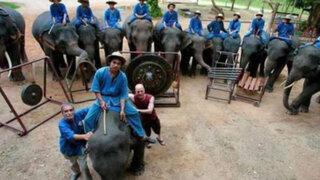 Una banda de 'peso': elefantes integran grupo musical y ya grabaron tres discos