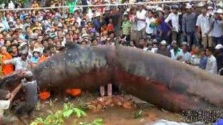 VIDEO: 'Monstruo' de Camboya se convierte en nuevo viral de Internet
