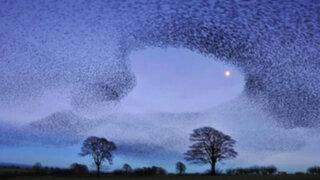 FOTOS: el mágico instante en el que captan el vuelo de más de 100 mil pájaros juntos