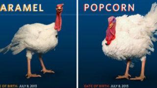 'Popcorn' y 'Caramel': los pavos elegidos para recibir indulto de Obama