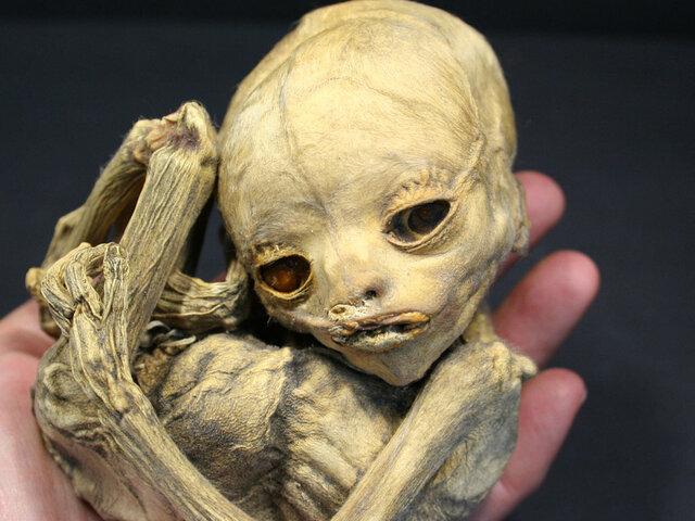 La momia más pequeña del mundo se encuentra en Perú