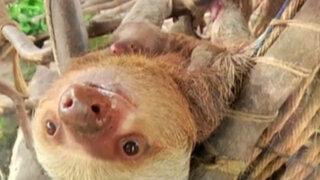 Los bebés de Huachipa: adorables y nuevos miembros de la familia animal