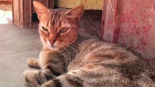 Vida de gatos: historias de felinos que se convirtieron en el mejor amigo del hombre