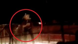 VIDEO: registran impactante ataque de tigre a su domador en circo de Madrid