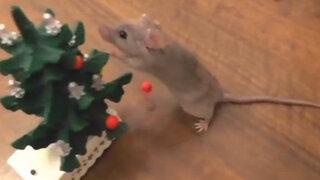 Tierno viral de YouTube: pequeño ratón 'enseña' a decorar árbol de Navidad