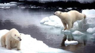 Océano Ártico: predicción de inminente deshielo que amenaza su vasta fauna