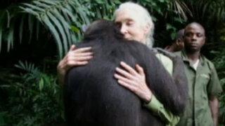 Congo: científica Jane Goodall protagoniza tierna despedida con un chimpancé