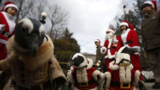 """""""Pingüinos Noel"""" causaron sensación en parque de diversiones en Corea del Sur"""