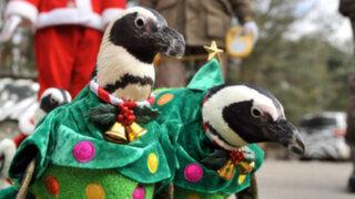 FOTOS: Pingüinos se visten de Papá Noel para desfile navideño en Corea del Sur