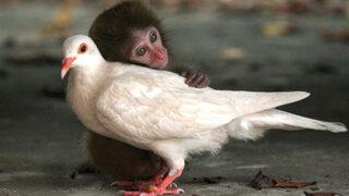 FOTOS: amistades conmovedoras del mundo animal inmortalizadas por Nat Geo