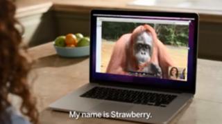 Ambientalistas publican conmovedor video para luchar contra la deforestación