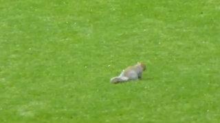 Ardilla paralizó encuentro deportivo de la segunda división inglesa