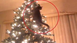 VIDEO: parece que estos gatitos odian la Navidad