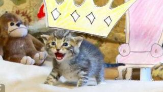VIDEO: Gatitos protagonizan tierna recreación de la película 'El Rey León'
