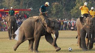 Elefantes disputan un partido de fútbol en tradicional fiesta en Nepal