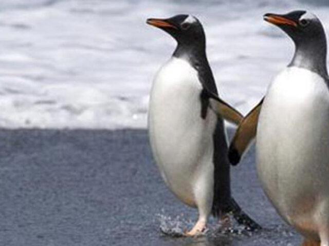 Alertan sobre sexta extinción masiva de animales en el mundo