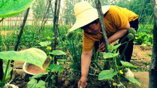 China: más de 3 millones de héctareas de tierra para cultivo están contaminadas