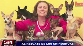 Neoyorquina se convierte en salvadora de chihuahuas en Estados Unidos