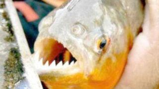 Argentina: nuevo ataque de peces palometas siembra el pánico entre bañistas