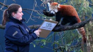 FOTOS: Así se realizó un divertido censo en un zoológico de Inglaterra