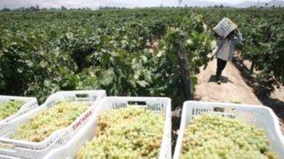 En Ruta: Conozca Santa Cruz de Flores, la capital del vino y del buen pisco