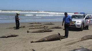 Chiclayo: hallan más de 40 especies marinas muertas en Puerto Eten