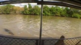 Escalofriante video: cocodrilo atacó a un guía turístico durante paseo por un río