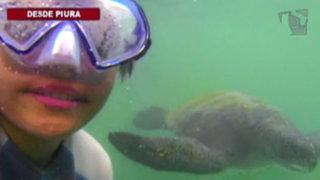Nadando con tortugas: una inolvidable experiencia en la playa El Ñuro