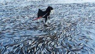 FOTOS: mar se congeló tan rápido que atrapó y mató al instante a miles de peces