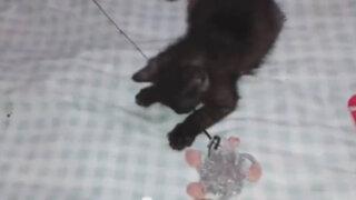 Video de un gatito ciego conmueve a cientos de personas YouTube
