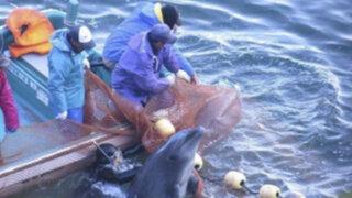 Gobierno japonés defiende la matanza de delfines ante las críticas