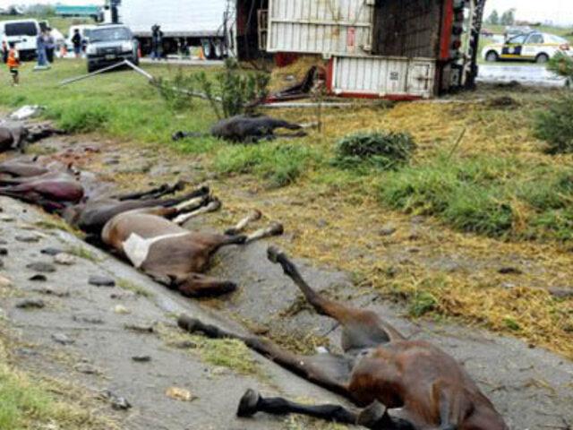Argentina: mueren diez caballos luego de volcarse camión que los trasladaba