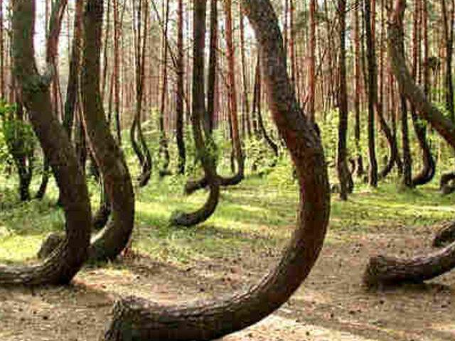 FOTOS: conoce los 10 bosques más extraños y misteriosos de la Tierra