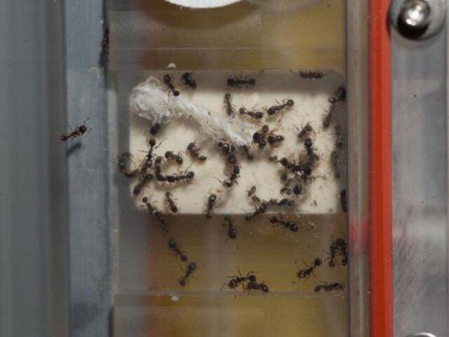 FOTOS: cientos de hormigas invaden Estación Espacial Internacional
