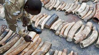 Singapur anuncia que prohibirá el comercio interno de marfil