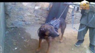 'Prisionero de guerra': talibanes toman como rehén a perro estadounidense