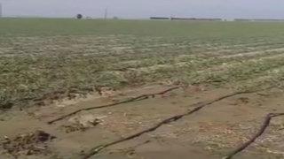 EEUU: California sufre la peor sequía en 500 años y se declara en emergencia