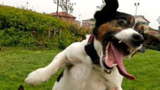 FOTOS: conoce a los 20 animales más felices del planeta